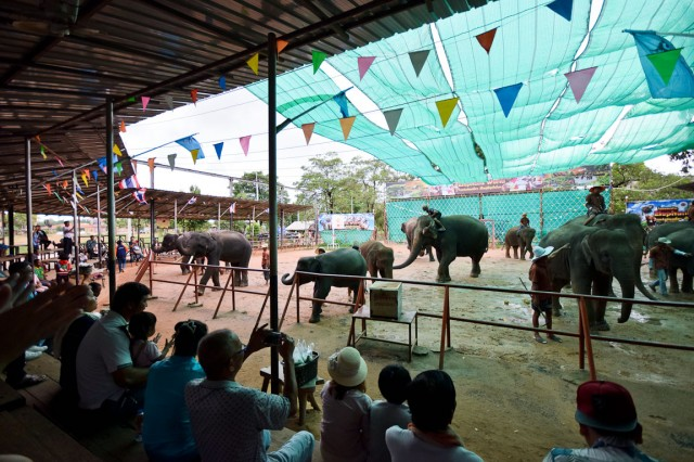 ช้าง (1)