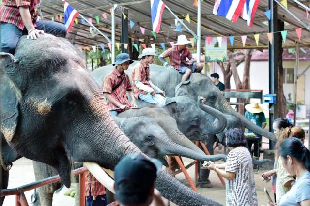 ช้าง (3)