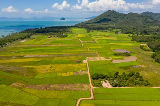 Aerial,Drone,View,Of,Beautiful,Rice,Paddys,On,The,Thai