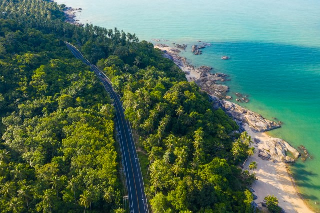 High,Angle,View,Of,Road,Pass,Through,Coconut,Tree,Forest