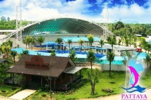 PattayDolphins